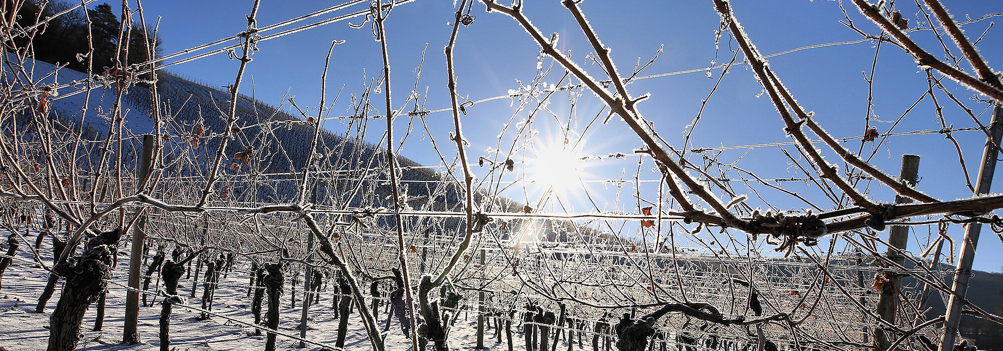Winterliches Weinparadies Franken